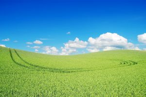 Beautiful Green Landscape