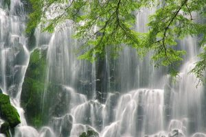 Big Forest Waterfall