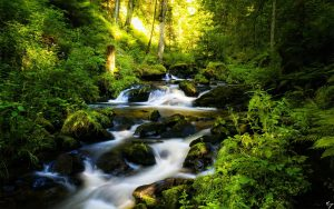 Black Forest In Germany 2