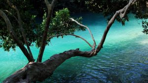 Branch Above Water