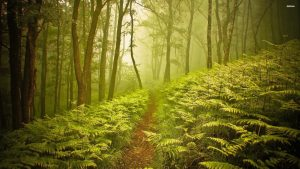 Forest Alley HD