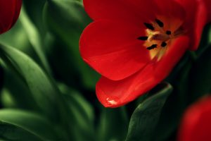 Great Red Flower