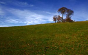Indian Tree Hill
