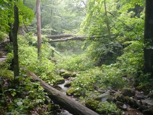 River Deep In Forest