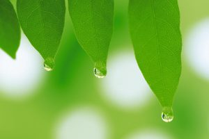 Three Water Drops