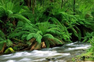 Yarra Ranges National Park Australia